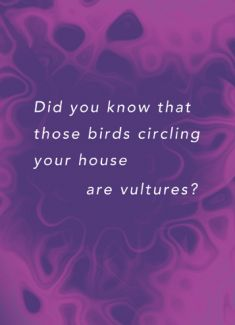 Did you know that those birds circling your house are vultures?